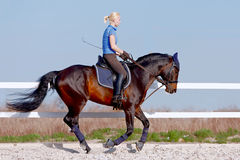 Horsewoman. The horsewoman on a brown horse in an arena against the blue sky Stock Image