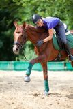 Horsewoman Obraz Royalty Free