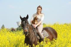 horsewoman Imagens de Stock