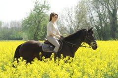 horsewoman Fotografia de Stock