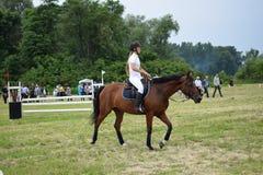 horsewoman Stockbild