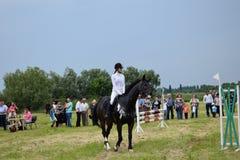 horsewoman Stockbilder