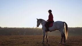 Horsewoman on the background of a landscape on horseback in the middle of the field. Slow motion. Side view. Horsewoman on the background of a beautiful autumn stock footage