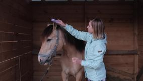 A horsewoman brushes the horses mane and talks to it in the stable stock video