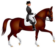 Horsewoman on a Dressage horse Royalty Free Stock Photos