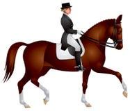 Horsewoman em um cavalo do Dressage Fotos de Stock Royalty Free