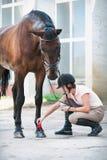 Horsewoman Groomer позаботить о копыто лошади каштана стоковое изображение rf