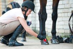 Horsewoman Groomer позаботить о копыто лошади каштана стоковое фото rf