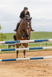 Horsewoman is jumping over the hurdle. Vertically. Royalty Free Stock Photos