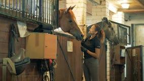Horsewoman ono uśmiecha się klepiący brown konia w stajence zbiory