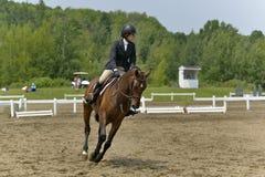 Horsewoman przeszkoda w przygotowaniu Zdjęcie Royalty Free