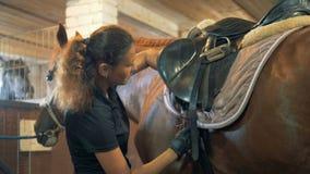 Horsewoman przymocowywa paski na comberze, zakończenie up zdjęcie wideo