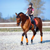 The horsewoman on a red horse. Equestrianism. Horse riding. Horse racing. Rider on a horse Royalty Free Stock Photo