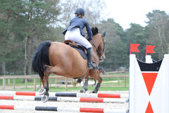 Horsewoman in show jumping Stock Photos