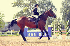 The horsewoman on a sports horse at competitions. Stock Photos