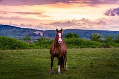 Horsing ao redor no por do sol fotografia de stock royalty free