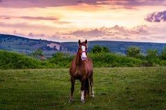 Horsing autour au coucher du soleil photographie stock libre de droits