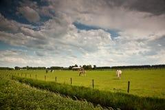 Horsis nel campo dell'azienda agricola Immagini Stock Libere da Diritti