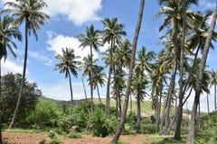 Horsley kullar, Andhra Pradesh, Indien Royaltyfri Bild
