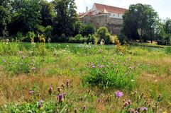Horsovsky Tyn城堡,捷克 库存照片