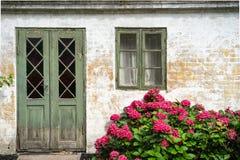 Hortênsia na flor vermelha esplêndida Fotos de Stock Royalty Free