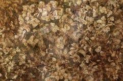 Hortênsias secadas no fundo Textured imagens de stock royalty free