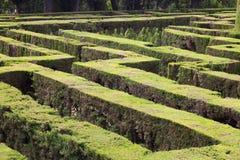 Horta迷宫公园的植物在巴塞罗那 免版税库存照片