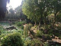 Hortaliças da lagoa do lírio Imagem de Stock