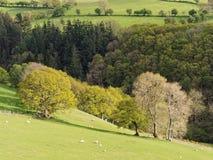 Hortaliças da mola em Gales Foto de Stock Royalty Free