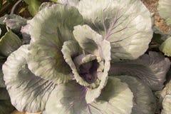 Hortaliças verdes imagem de stock royalty free