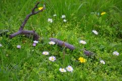 Hortaliças verdes da clareira da mola Fotografia de Stock