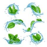 Hortelã de água fresca O líquido espirra com a folha verde do mentol para a coleção realística do vetor da bebida ilustração royalty free