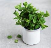 Hortelã fresca em um vaso Imagem de Stock Royalty Free