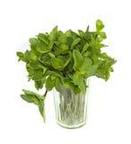 Hortelã verde no vidro imagem de stock royalty free