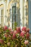 Hortense unter dem Fenster Lizenzfreies Stockbild