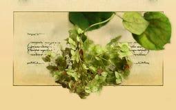 Hortensewijnoogst op oude document achtergrond Royalty-vrije Stock Afbeelding