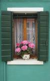 hortensi okno Zdjęcia Stock