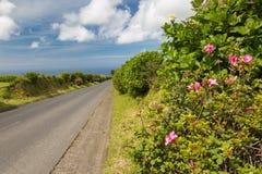 Hortensia растет на острове Sao Мигеля везде Стоковое Фото