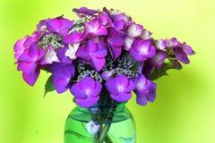 Hortensia assez pourpre de Lacecap de bouquet Photographie stock libre de droits