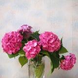 Hortensia Royalty Free Stock Photography