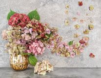 Hortensia blommar guld- garnering för buketten blom- höst Arkivfoto