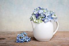 Hortensia-Blumen Lizenzfreie Stockfotografie