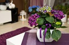 Hortensia comme décoration de pièce Image stock