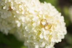 Hortensia con los anillos de bodas Foto de archivo