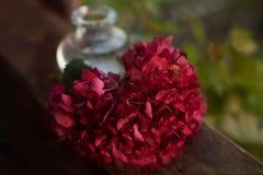 Hortensia de fleur de coeur Photo libre de droits