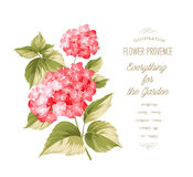 The Hortensia flower Royalty Free Stock Photo
