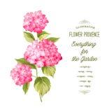 The Hortensia flower Stock Images