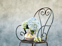 Hortensia Flowers Stock Photos