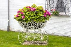 Hortensia flowers Royalty Free Stock Photo