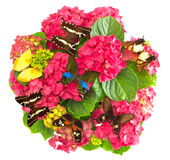 Hortensia flowers with colorful butterflies Stock Images